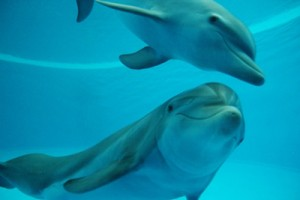 Barcelona Zoo: Dolphins