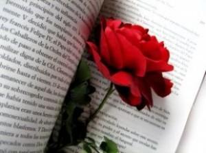 Book and Rose-Barcelona Diada Sant Jordi