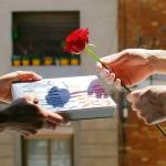 Book and Rose - La Diada de Sant Jordi Barcelona