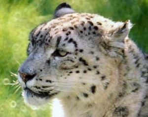 Barcelona Zoo: Cheetah