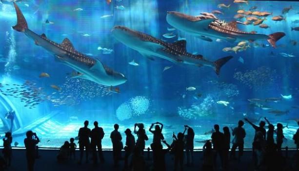 Barcelona-Aquarium -2
