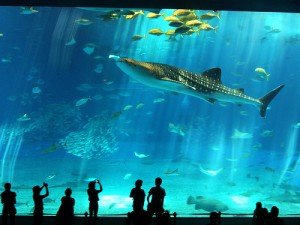 Barcelona Aquarium for Kids