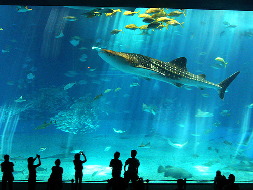 Barcelona Aquarium Family Activities in Barcelona