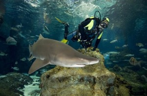 Swimming with Sharks, Barcelona