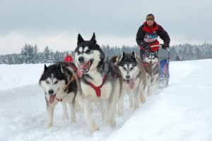 Mushing, Grandvalira Resort